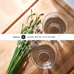 Clean Water Bloom
