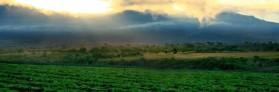 cropped-nutrilite-farms3.jpg